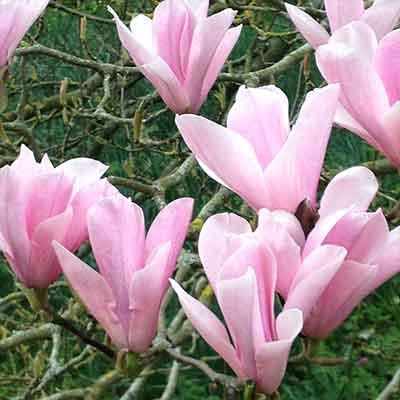 wellbeing flowers detail